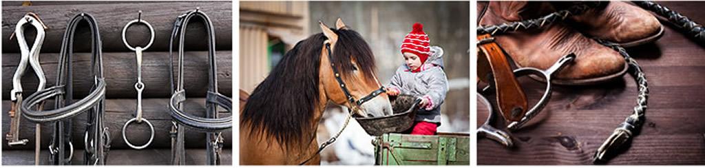 Gala Equitación