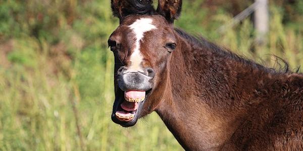 Más de 50 cosas curiosas sobre los caballos